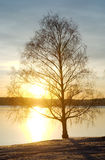 Barren tree against lake at sunset. Strong sunlight against dying tree global warming symbolism Royalty Free Stock Photography