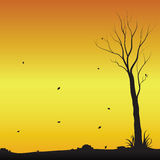 Barren tree alone in fall. The autumn tree alone not leaves Stock Photos