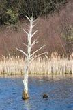 Barren Tree Bird Landing Stock Photos