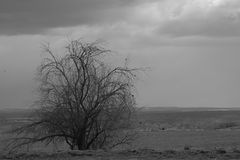 Barren tree. Black and white of a bare winter tree and birds Stock Photo