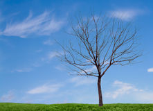 A barren tree with a blue sky and grass. A barren tree on a minimal landscape of grass and sky royalty free stock photos