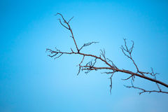 Barren tree branch at dusk Stock Images