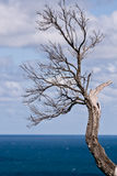 Barren tree branch in Victoria, Australia. Barren tree branch in Cape Schanck, Victoria, Australia on a clear spring day Stock Photo