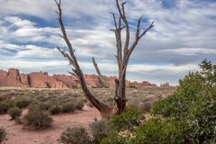 Barren tree in a desert landscape royalty free stock photography