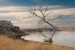 Barren tree in desert oasis stock images