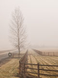 Barren tree and fence in fog Royalty Free Stock Images