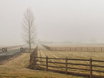Barren tree and fence in fog Stock Image