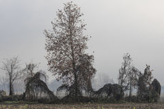 Barren tree in the fog Royalty Free Stock Image
