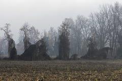 Barren tree in the fog Royalty Free Stock Photo
