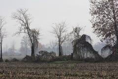 Barren tree in the fog Stock Photo