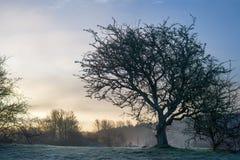 Barren tree on grassy hill Royalty Free Stock Photo