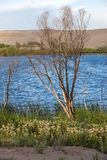 Barren tree by the lake. Royalty Free Stock Images