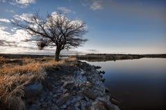Barren tree by lake in Washington. Stock Photo