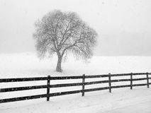 Barren tree in snow. Scenic winter pasture with barren tree and fence in western north carolina royalty free stock images
