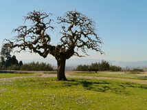 A springtime landscape Stock Photography