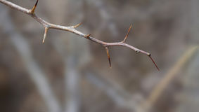 Barren tree twig. Closeup image of a barren tree branch twig royalty free stock photography