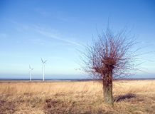 Barren tree, wind turbines. Sea horizon, rural area, green field, a barren tree in the foreground Royalty Free Stock Image
