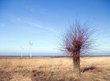 Barren tree, wind turbines. Sea horizon, rural area, green field, a barren tree in the foreground Royalty Free Stock Image