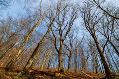 Barren trees in forest Stock Photo