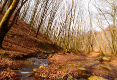 Barren trees and small river Royalty Free Stock Image