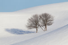 Barren Trees In Snowy Landscape Stock Photo