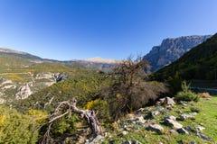 Barren trees and Vikos Gorge, Zagorochoria, Epirus, Greece Stock Photos