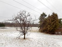 Barren Vs Leafed Tree in the Winter School Field. St. John Paul II Catholic Secondary field royalty free stock images