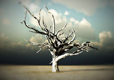 Barren Wilderness. An image of a dead tree within a barren wilderness landscape Royalty Free Stock Photography