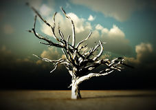 Barren Wilderness. An image of a dead tree within a barren wilderness landscape Royalty Free Stock Photos