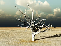 Barren Wilderness 9. An image of a dead tree within a barren wilderness landscape Royalty Free Stock Photography