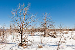 Barren winter landscape Royalty Free Stock Photo