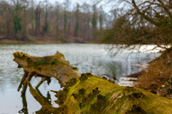 Barren winter at the Tisza (Tisa) river in Hungary Royalty Free Stock Photo