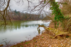 Barren winter at the Tisza (Tisa) river in Hungary Royalty Free Stock Images