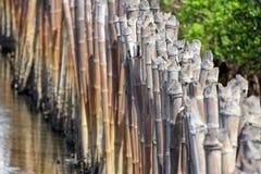 Barrera de bambú para el mangle Forest Protection Imagen de archivo libre de regalías