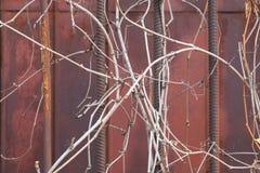 Barres de fer enveloppées avec l'herbe sèche images stock