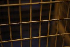 Barres en métal Images libres de droits