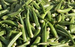 Barretta verde fresca della signora Immagini Stock