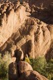 Barrette della scimmia, Marocco Fotografia Stock