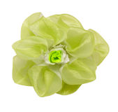 Barrette hair green flower isolated clipping. Barrette hair green flower isolated on white background clipping path Royalty Free Stock Image