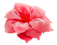 Barrette hair red flower isolated clipping p Royalty Free Stock Image