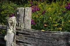 Barrière avec des fleurs de fin d'été image stock