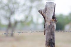 Barrière barbelée étirée avec des arbres autour du morni de samedi de ferme Image stock