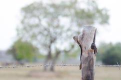 Barrière barbelée étirée avec des arbres autour du morni de samedi de ferme Photo stock