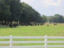 Barrière blanche avec des bétail Image libre de droits