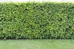 Barrière d'arbre d'une maison Photo stock