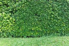 Barrière d'arbre d'une maison Image libre de droits