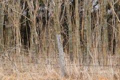 Barrière de Barewire devant la forêt photographie stock libre de droits