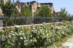 Barrière de fer avec de belles fleurs Photo stock