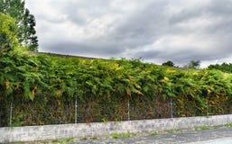 Barrière de fil et de ciment couverte de fougères devant élevées image libre de droits
