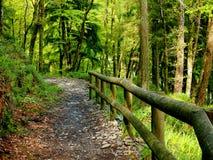 Barrière de forêt Photos libres de droits